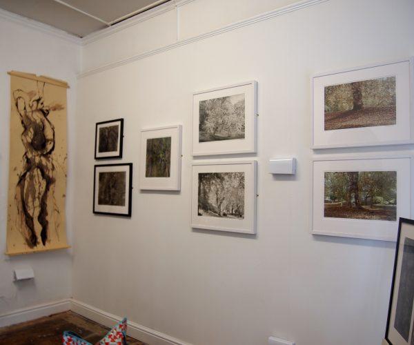 Installation of John Blakemore & Rosalind Pounder's exhibition, Arboretum