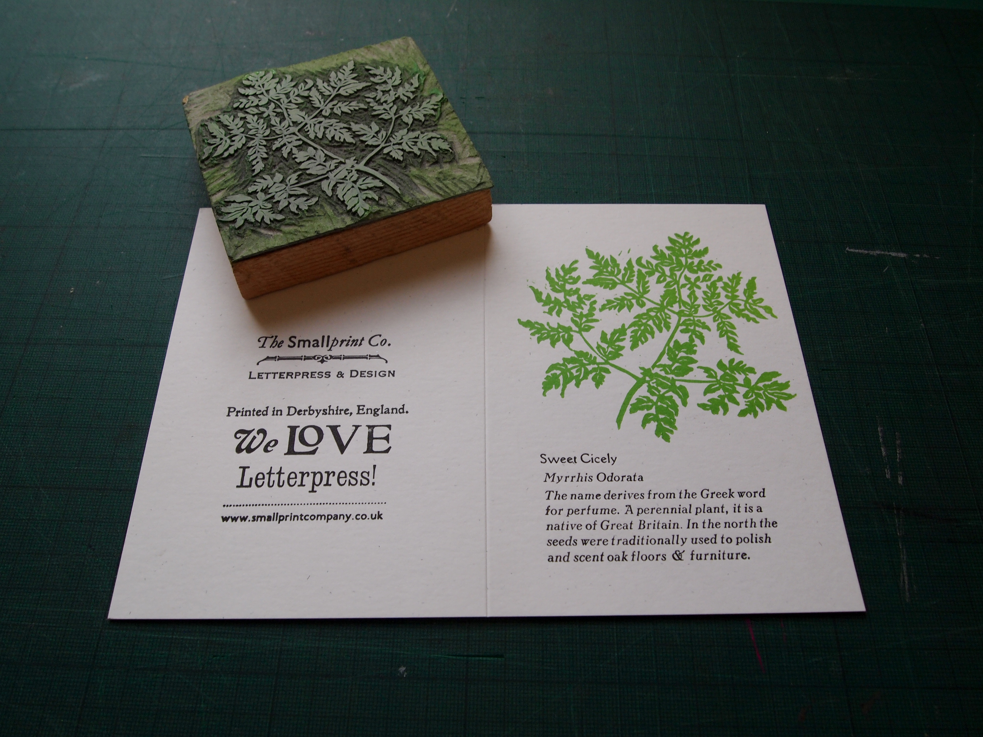 Sweet Cicely with lino block