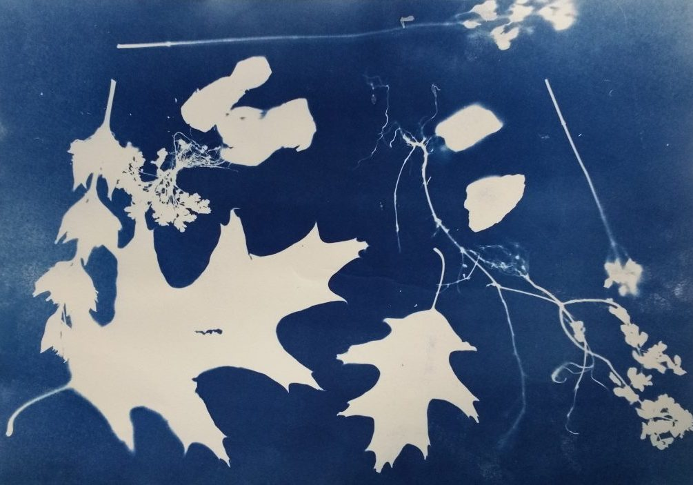 Cyanotype Workshop with Clive Wheeler